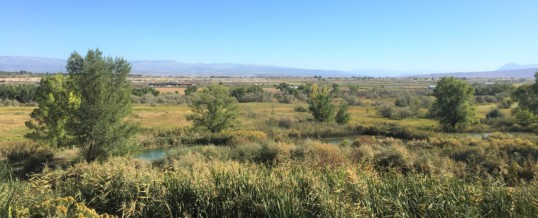 Twenty Years of Habitat Restoration in Delta County