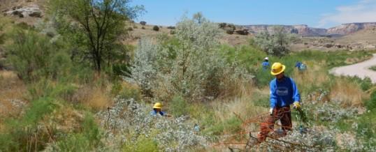 Crew working to restore natural habitat along Monument Corridor Trail