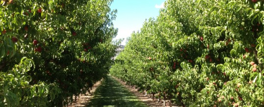 Ruckman Farm Conserved for Future Generations