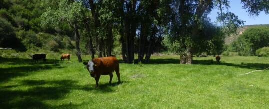 Colorado West Land Trust announces conservation of 1,200 acre ranch