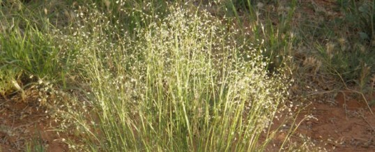 Native Grasses Project Needs Your Support