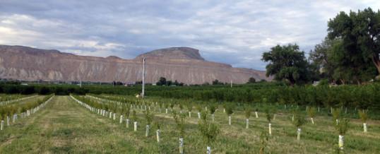 Colorado West Land Trust nears a long-term goal